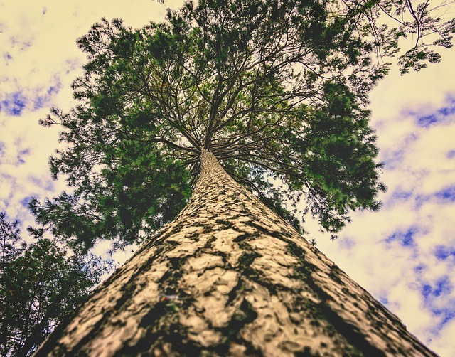 valores medioambientales dezero